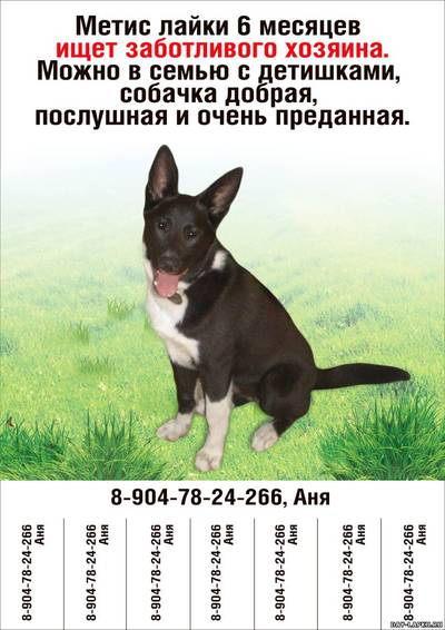 Объявления о продаже животных в СанктПетербурге купить