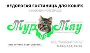 Гостиница для кошек в Нижнем Новгороде «Мур-Да-Мяу»