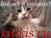 всё о кошках и для кошек